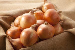 Long Day Yellow Onion