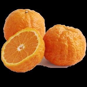 Golden Nugget Tangerine
