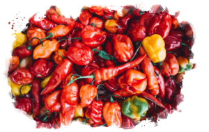 Mixed Chili Peppers
