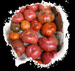 Solar Flare Heirloom Tomato